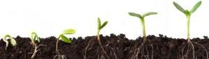 GRAND OPENING: KTL Seed Exchange